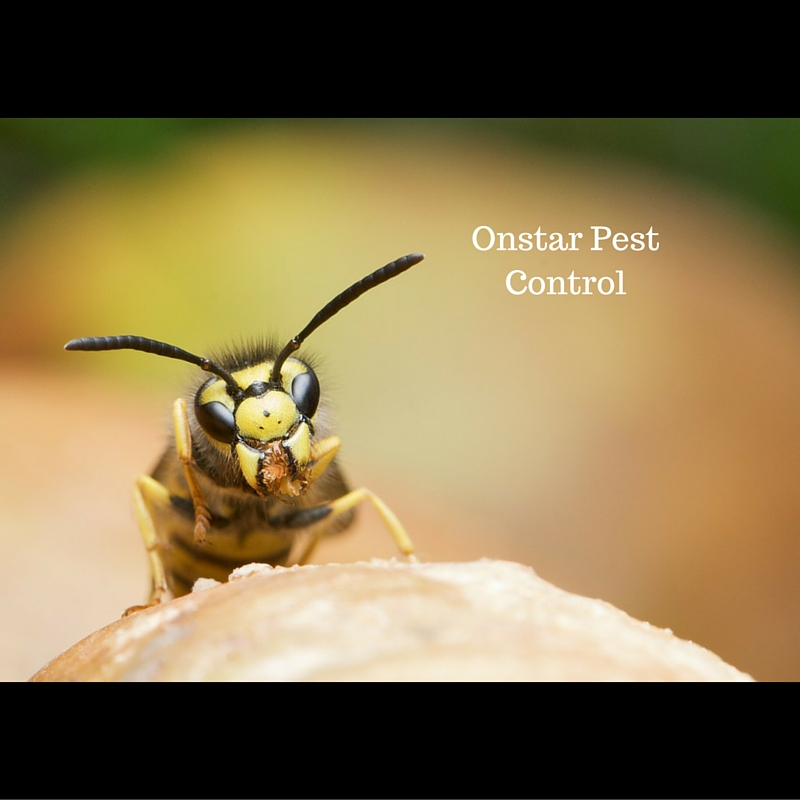 bee pest control in Oakdale CA