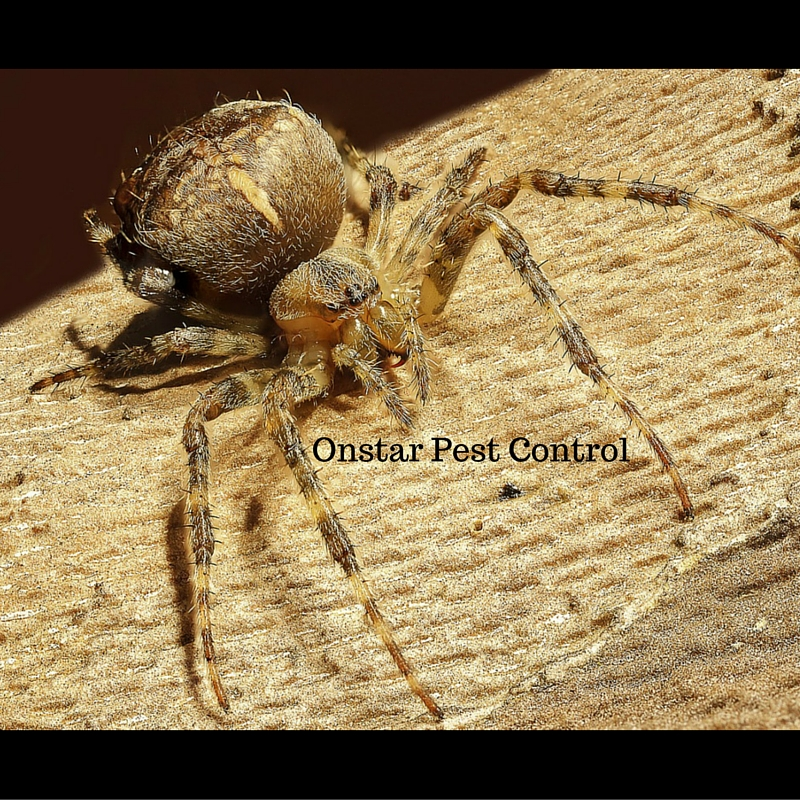 Spider extermination in local Modesto home